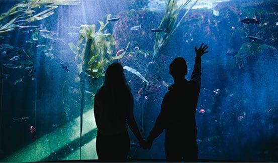 undersea-garden