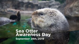 sea-otter-awareness