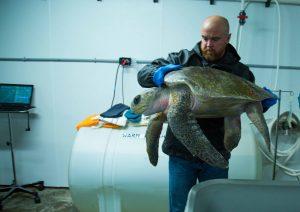 Both Olive Ridley Sea Turtles Pass Despite Aquarium Efforts
