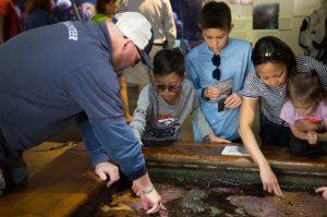 volunteer-at-the-aquarium