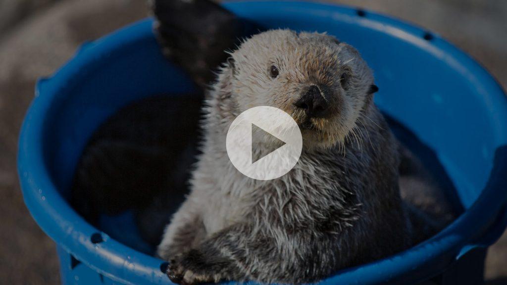 The Oregon Coast Aquarium is Going LIVE in 3..2..1..